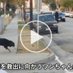 警察に連行されるご主人様を助けようと窓から飛び出した『犬』が射殺される衝撃映像!!