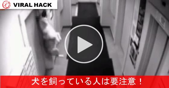 【ワンコの悲劇】 エレベータにリードが絡まれ宙づりに・・・!