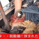 【農家も命がけ!】 農機具に腕を巻きこまれ救出される農夫