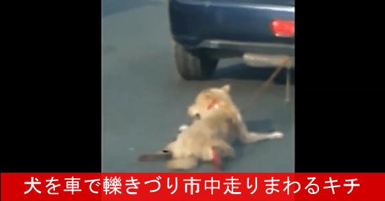 【閲覧注意!】 犬を車でひきづり市中を走り回るキチ ⇒ 文化の違いという問題ではないだろ!