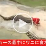 【驚愕映像】ショーの最中にワニに食われて見せるインストラクター(;´∀`)