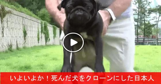 【始まったか!】 死んだ犬をクローン化した日本人が話題に!