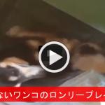 【見ちゃいや!】 犬小屋を覗いてみたら仰向けで激しいオ○ニーの真っ最中wwwwww