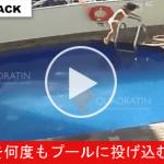 【監視カメラ映像】 三歳児を何度もプールに投げる義理父 ⇒ 母親は寝ていた・・・?
