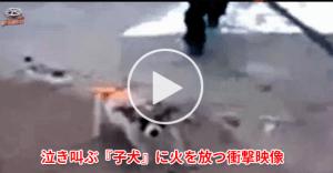 【閲覧要注意】泣き叫ぶ『子犬』に油を注ぎ火を付けるイスラム教徒の若者たち……