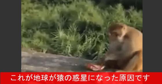 【これは酷い】野生の猿に爆竹入りのチップスを渡す観光客